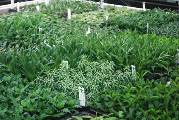 vaste perkplanten soorten